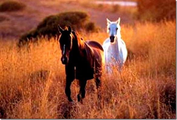 Brown & White Horse