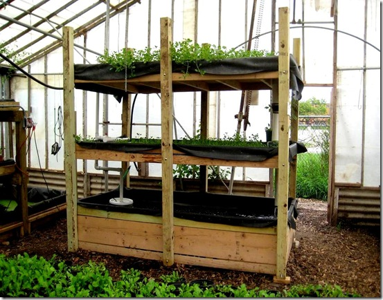 A small, portable aquaponics system.