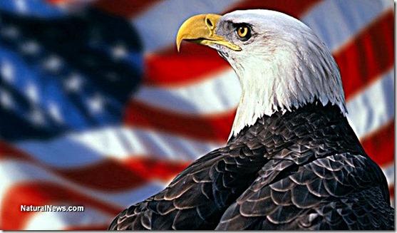 American (Bald) Eagle - US Flag Background