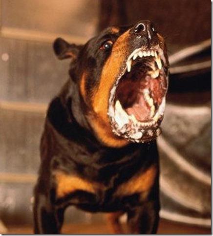 Vicious Mad Dog 2